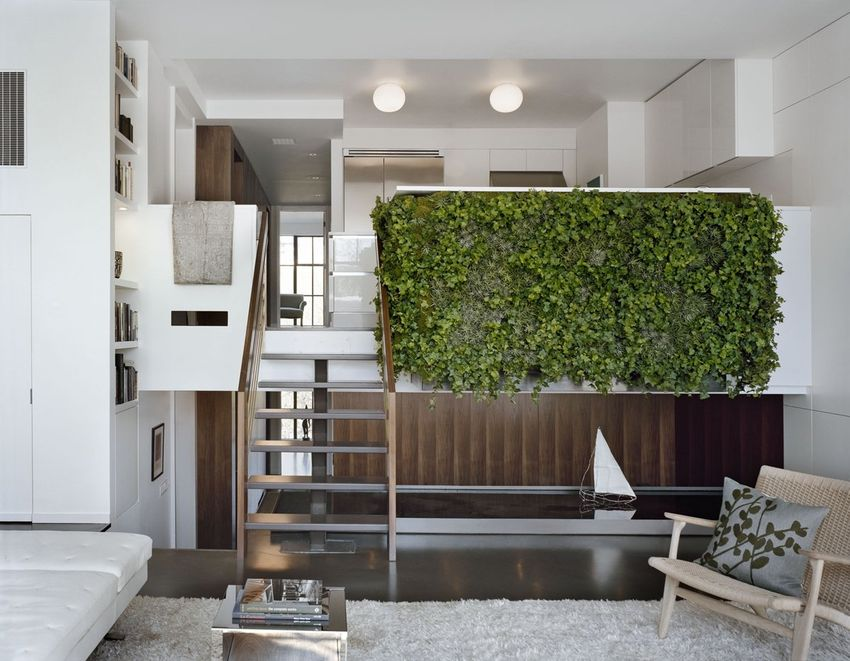 Home decorating idea plants