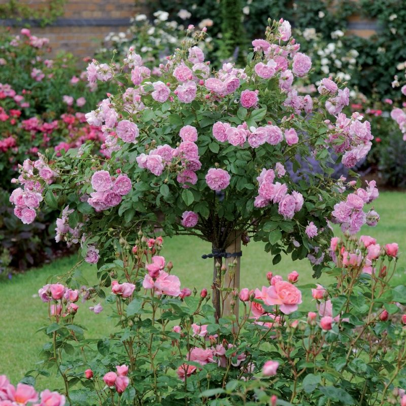 How to create beautiful garden decoration with roses for How to make a beautiful garden