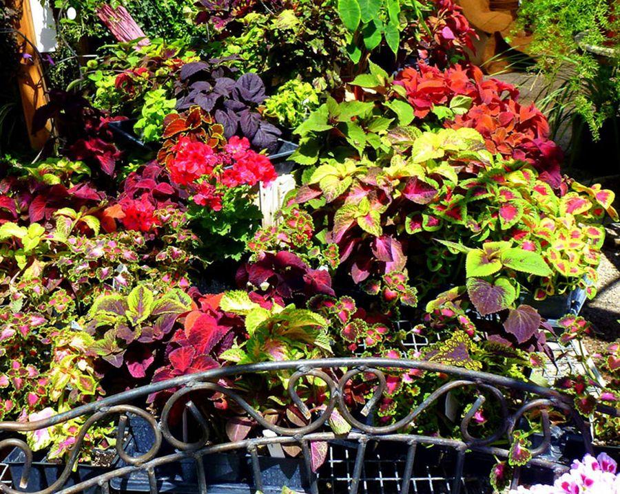 Backyard Foliage Design