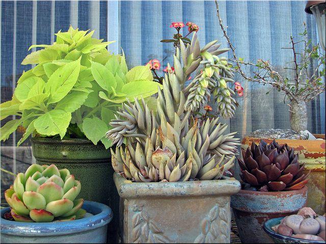 Maximize Plants
